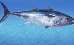 Histamina: la intoxicación por el pescado