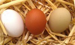 ¿Cúal es el significado del código impreso en la cáscara del huevo?