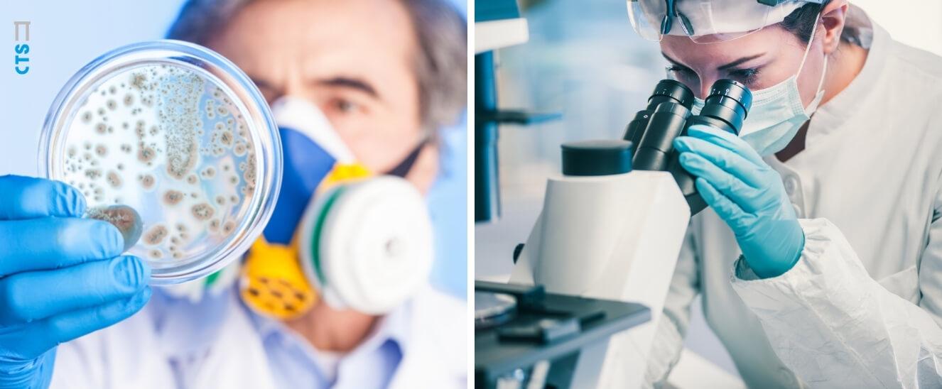 Tipos de bacterias beneficiosas y perjudiciales para nuestro organismo