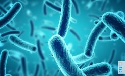 Tipos de bacterias que existen: todo lo que debes saber.